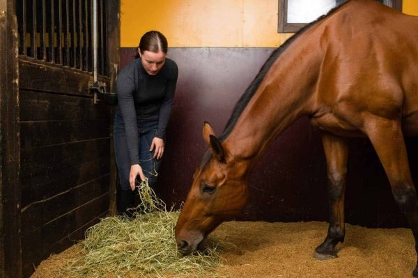 What Makes Good Horse Feed?